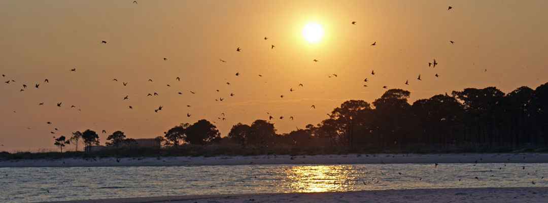 sunsetbirds1